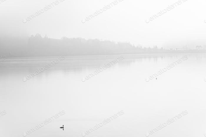 Lonely duck over calm lake in fog,fine art B&W