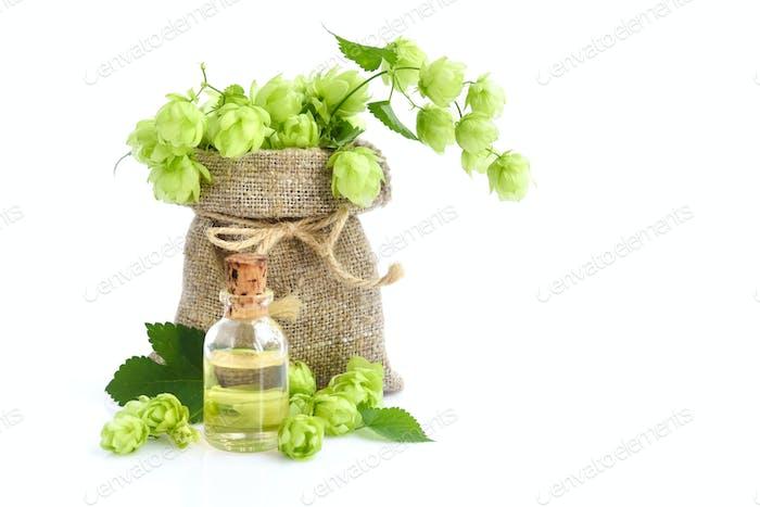 Fresh green hops (Humulus) in burlap bag with medicinal plant ex