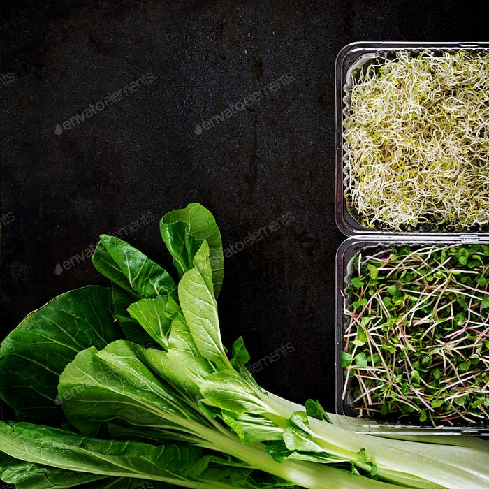 Bok choy or Chinese-cabbage and micro greens on black table. Pak