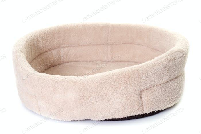 dog cushion in studio