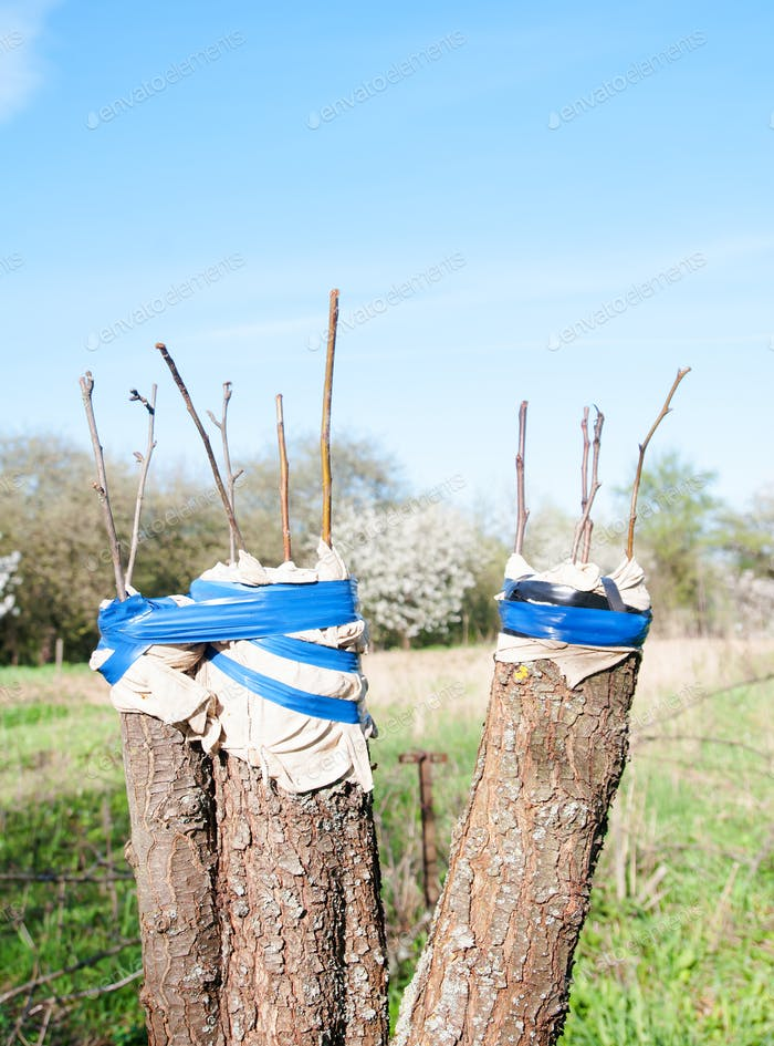 trees renovation