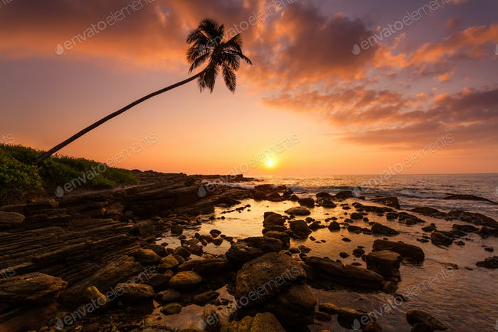 Lonely palm tree on the beach at sunset