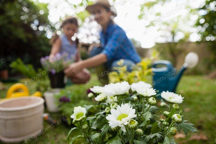 Weiße Blumen im Topf mit Mutter und Tochter im Hintergrund