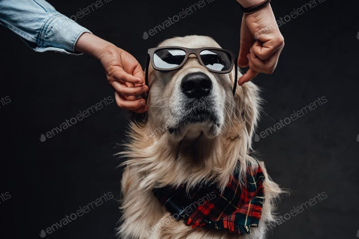 Man wearing a sunglasses on a beautiful and fashionable doggy