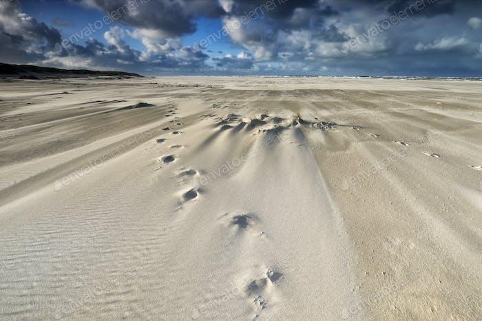 tracks on sand beach on windy day