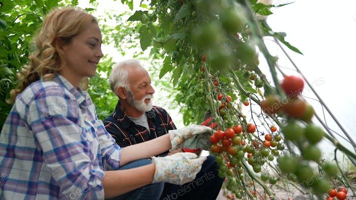 Familia trabajando juntos en invernadero. Concepto de alimentos orgánicos saludables