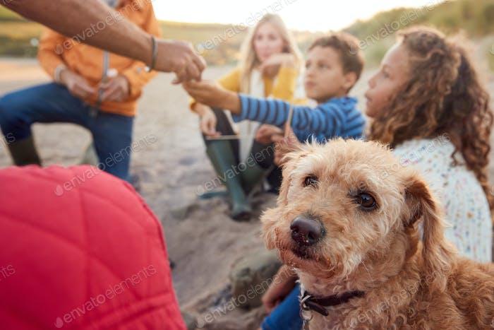 Haustier Hund mit Multi-Generation Familie Toast Marshmallows um Feuer auf Winter Strand Urlaub