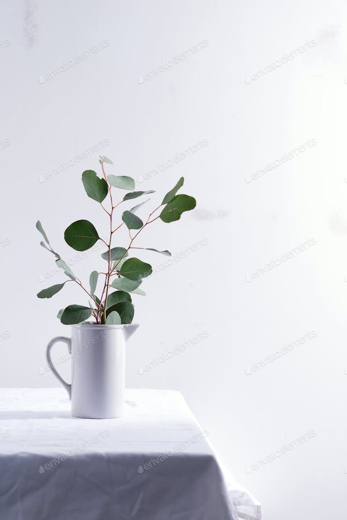 Natural twig of fresh evergreen Eucalyptus plant in a ceramic mug on a table covered textile cloth