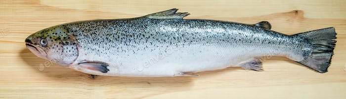 Atlantic Salmon whole fish
