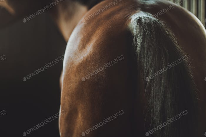 Horse Back and Tail