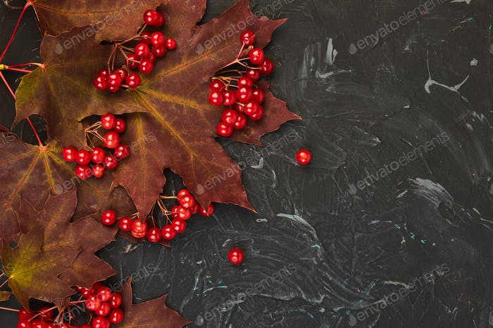 Autumn background with autumn maple red leaves and viburnum berries