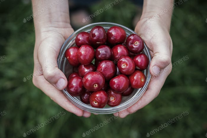 Boy holding a bowl of fresh ripe red cherries