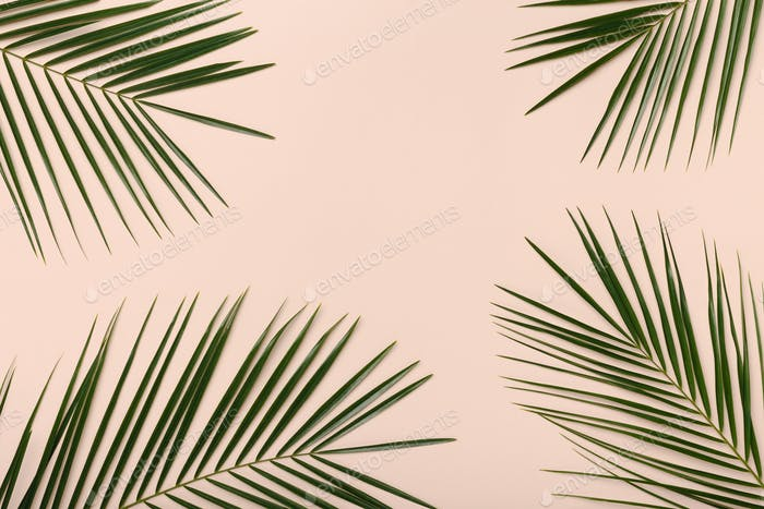 Green tropical palm leaves pattern isolated on pink