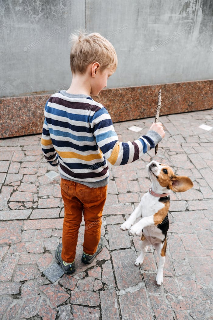 Outdoor Activities For Beagles. Games to play with beagle puppies. How to Entertain puppy and adult