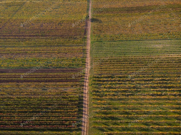Countryside rural road in autumn vineyards, aerial drone from ab
