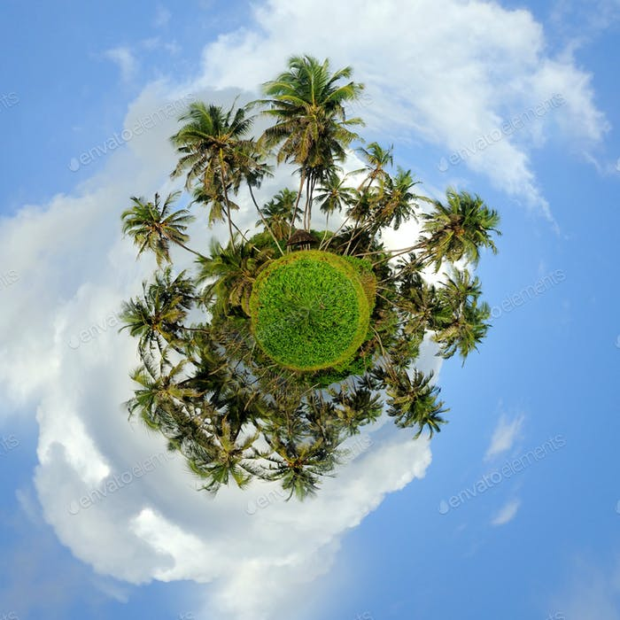 360 degree view of Palm tree