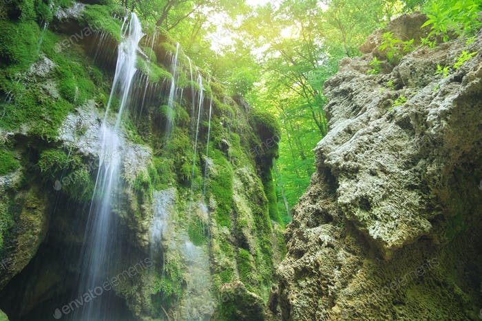Waterfall into the canyon forest.