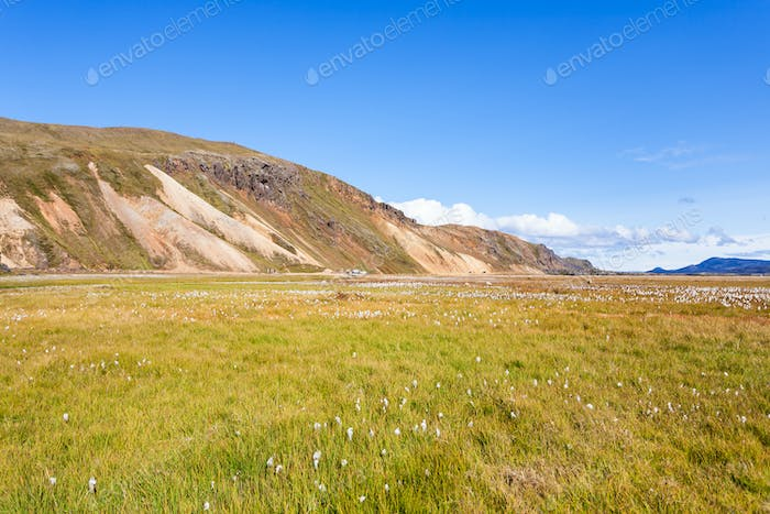 green meadow in Landmannalaugar in Iceland