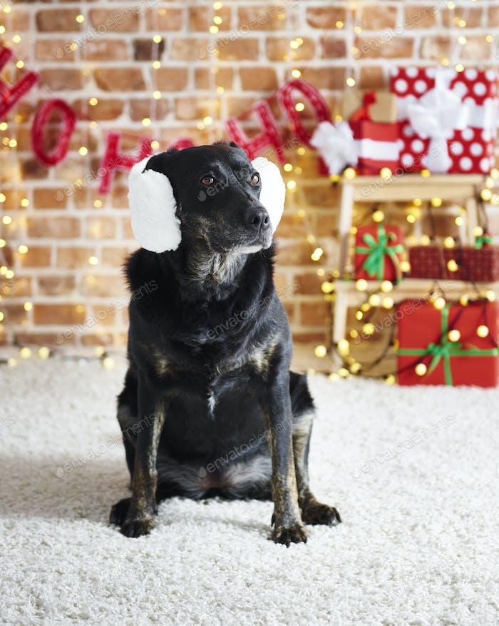 Lustige Hund trägt einen weißen Ohrenschützer