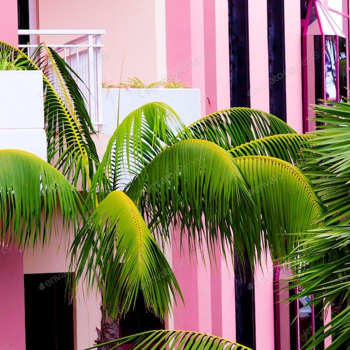 Palm on pink location. Plants on pink concept. Fashion beach vib