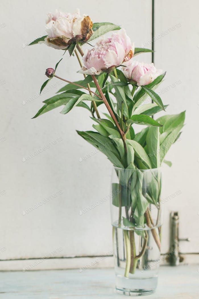 Pink blossom peonies
