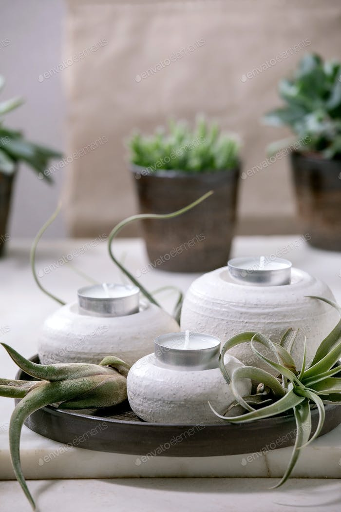 Plant composition with tillandsia air and candle holders