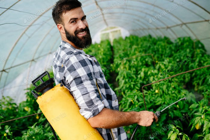 Young worker spraying pesticides on fruit plantation