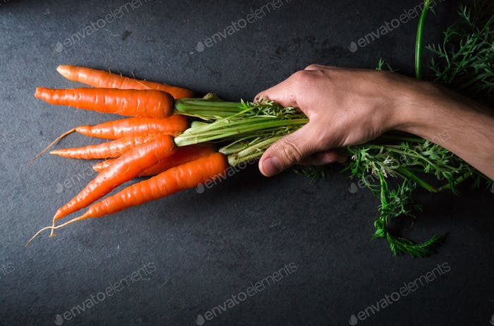 Fresh carrots with a tops in hand on a gray background