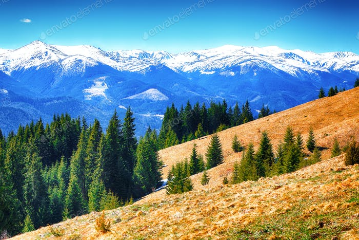 dyllic Spring alpine morning landscape with fresh green meadows