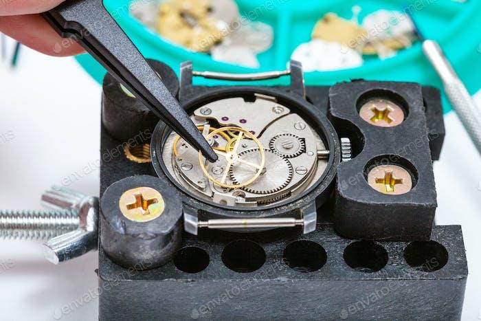 Reparatur der Uhr im Halter mit Pinzette Nahaufnahme