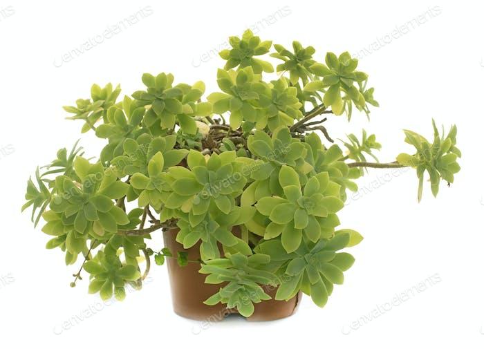 succulent plant in studio