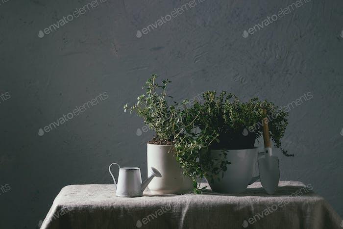 Küchengarten-Grüns