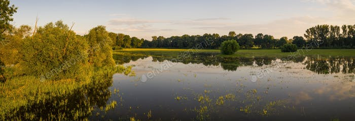 Panoramic view on flooded meadow in summer at sunrise
