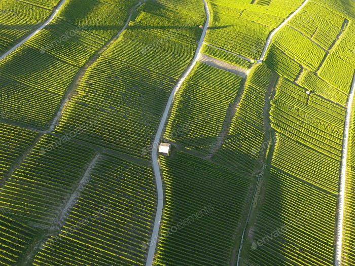 Aerial of Vineyard fields between Lausanne and Geneva in Switzer