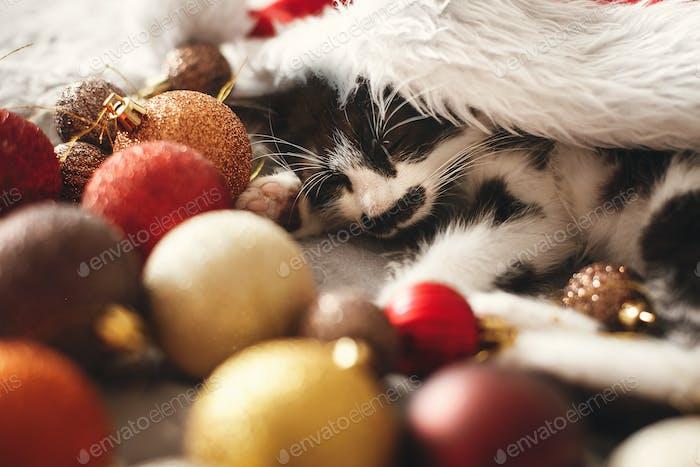 Adorable kitten napping. Season's greetings