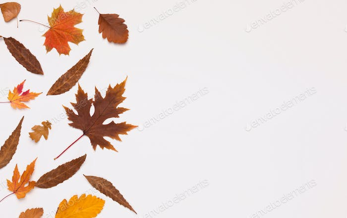 Colored fallen different leaves on white background