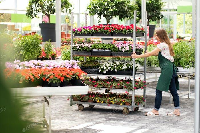 Young nursery employee pushing a flower cart