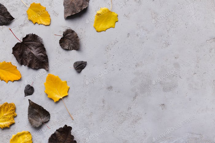 Autumn border of fallen black and yellow leaves on grey