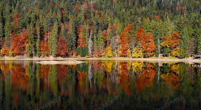 Autumn forest reflected in water. Landscape with lake