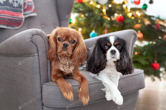 Zwei niedliche Hunde auf dem Sessel