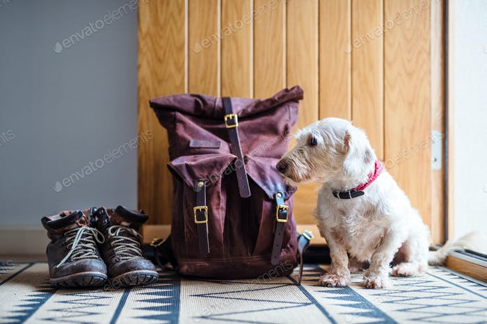 Pair of boots, backpack and a dog sitting by open front door