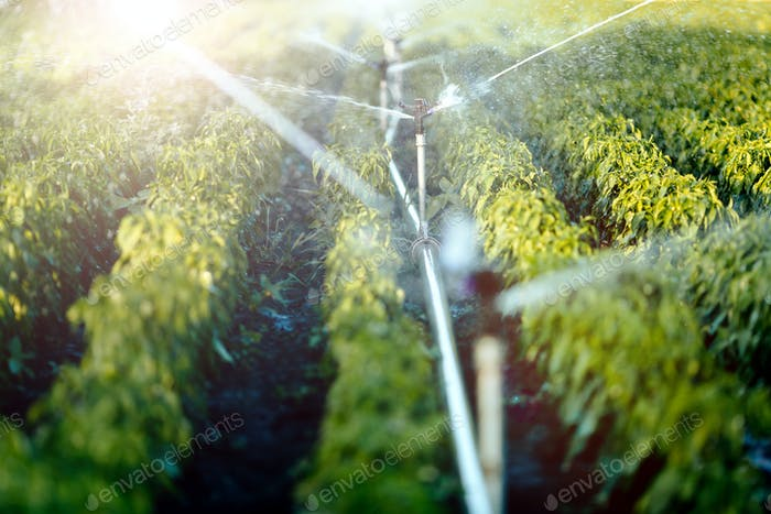 Bewässerungssystem in Funktion