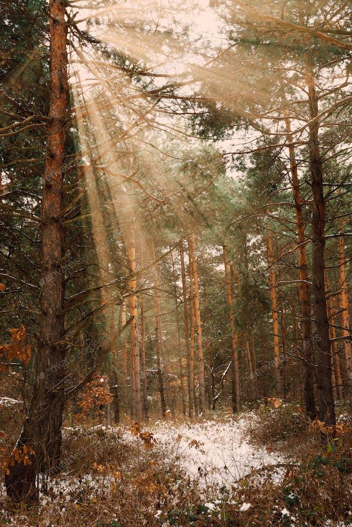 Traumhafte Landschaft mit Winterwald und hellen Sonnenstrahlen