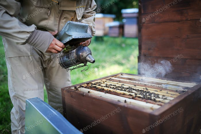 Unrecognizable man beekeeper working in apiary, using bee smoker