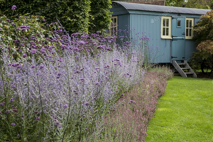 Garden with lawn, flowerbed with lavender and blue vardo in the background.