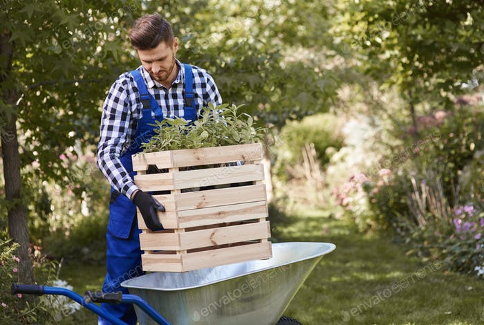 Gardener putting seedling in wheelbarrow