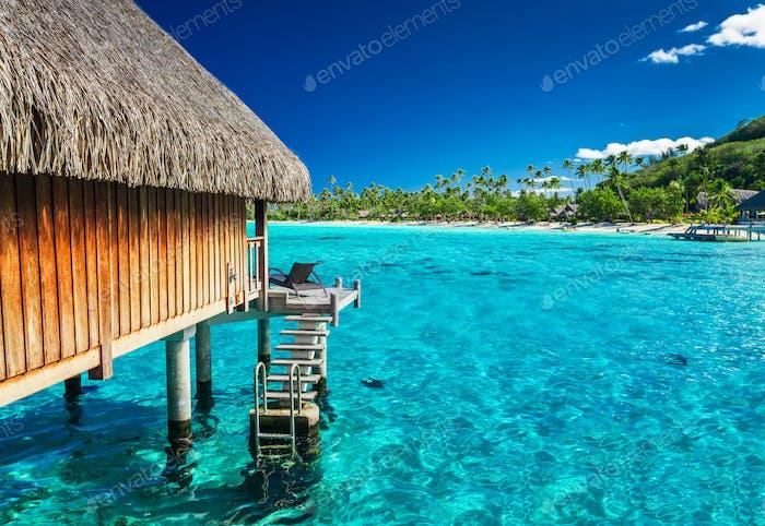 Wasservillen am grünen tropischen Riff