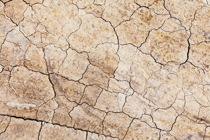 Dried crack land
