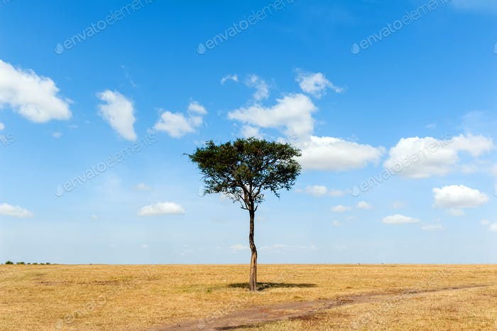 Landscape with nobody tree in Africa