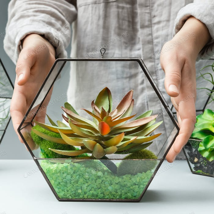Woman showing succulent garden in glass florarium